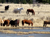 I knew there were wild horses in this area, but I had no idea they were so abundant.