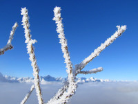 I never tire of seeing Hoar Frost backed by a clear blue sky.